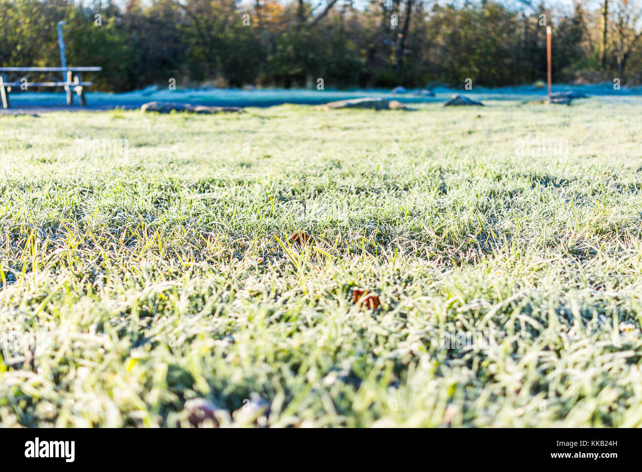 White frost ice crystals on green lawn grass in morning on ground by forest and campground park - Stock Image