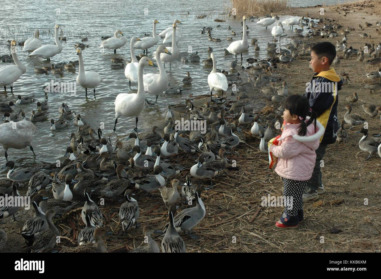 Two young children standing among waterfowl at the edge of a body of water. Image Courtesy John Pearce/USGS. 2007. - Stock Image