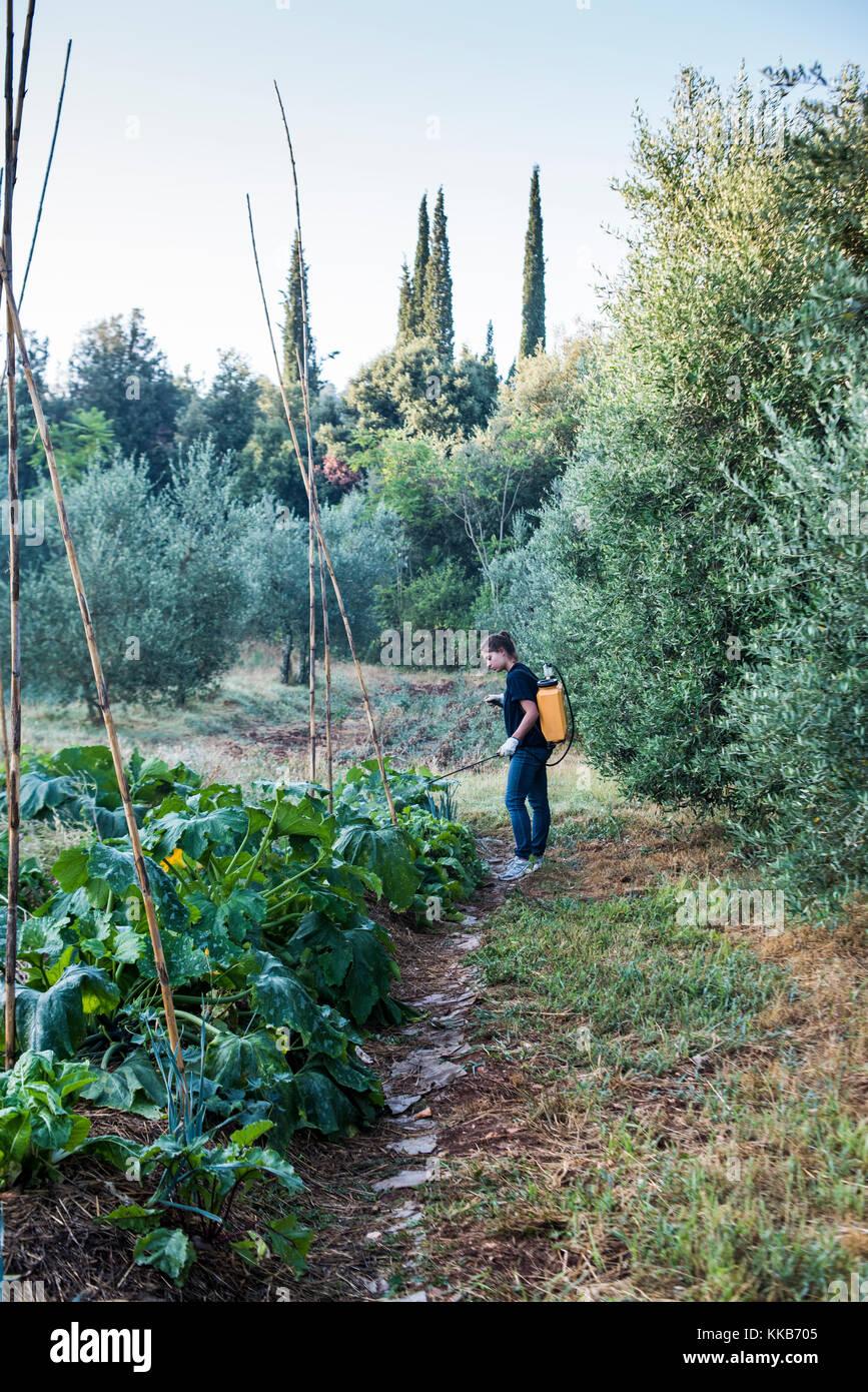 Tuscany, Italy - July 26, 2016: WWOOFer spraying natural micro organisms on garden, Tenuta di Spannocchia. - Stock Image