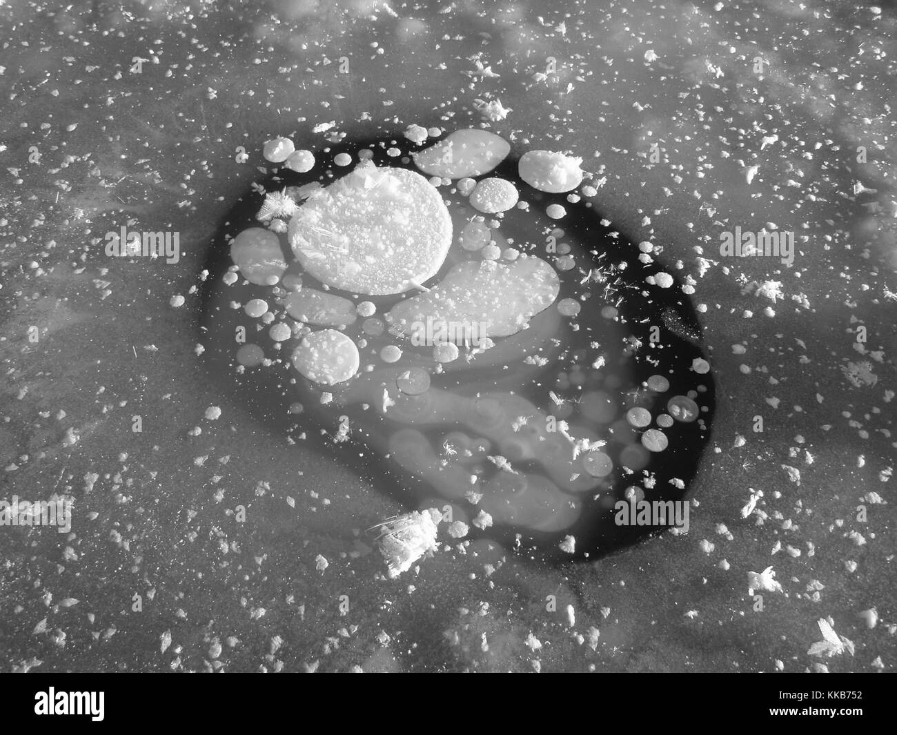 Methane gas bubbles became trapped in lake ice when microbes consume the carbon in permafrost that has thawed and - Stock Image