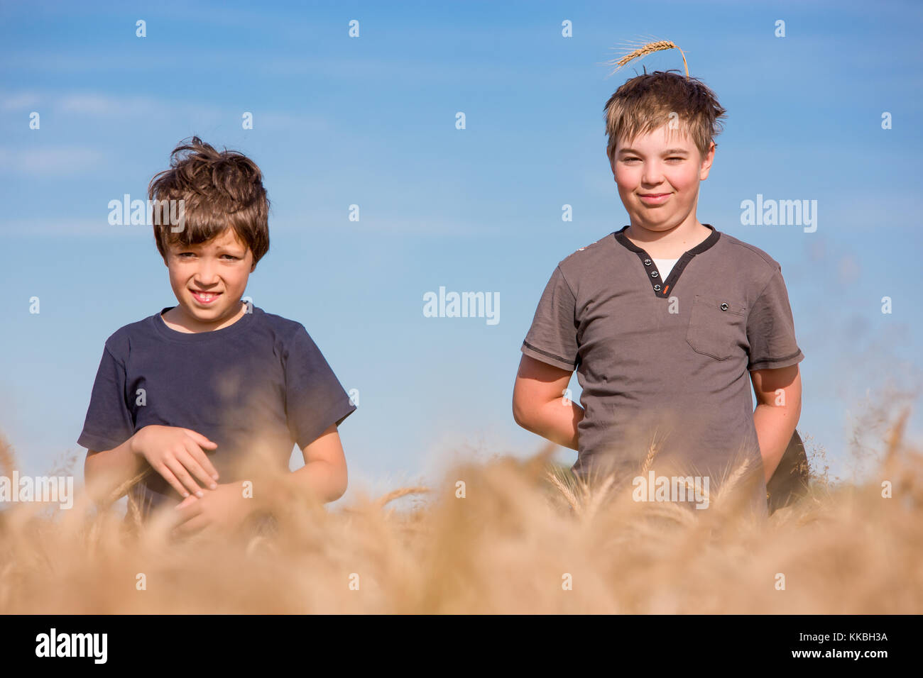 Brothers, boys hiding and playing in green corn, barley or wheat. Cute kids, children on the field in the summer - Stock Image