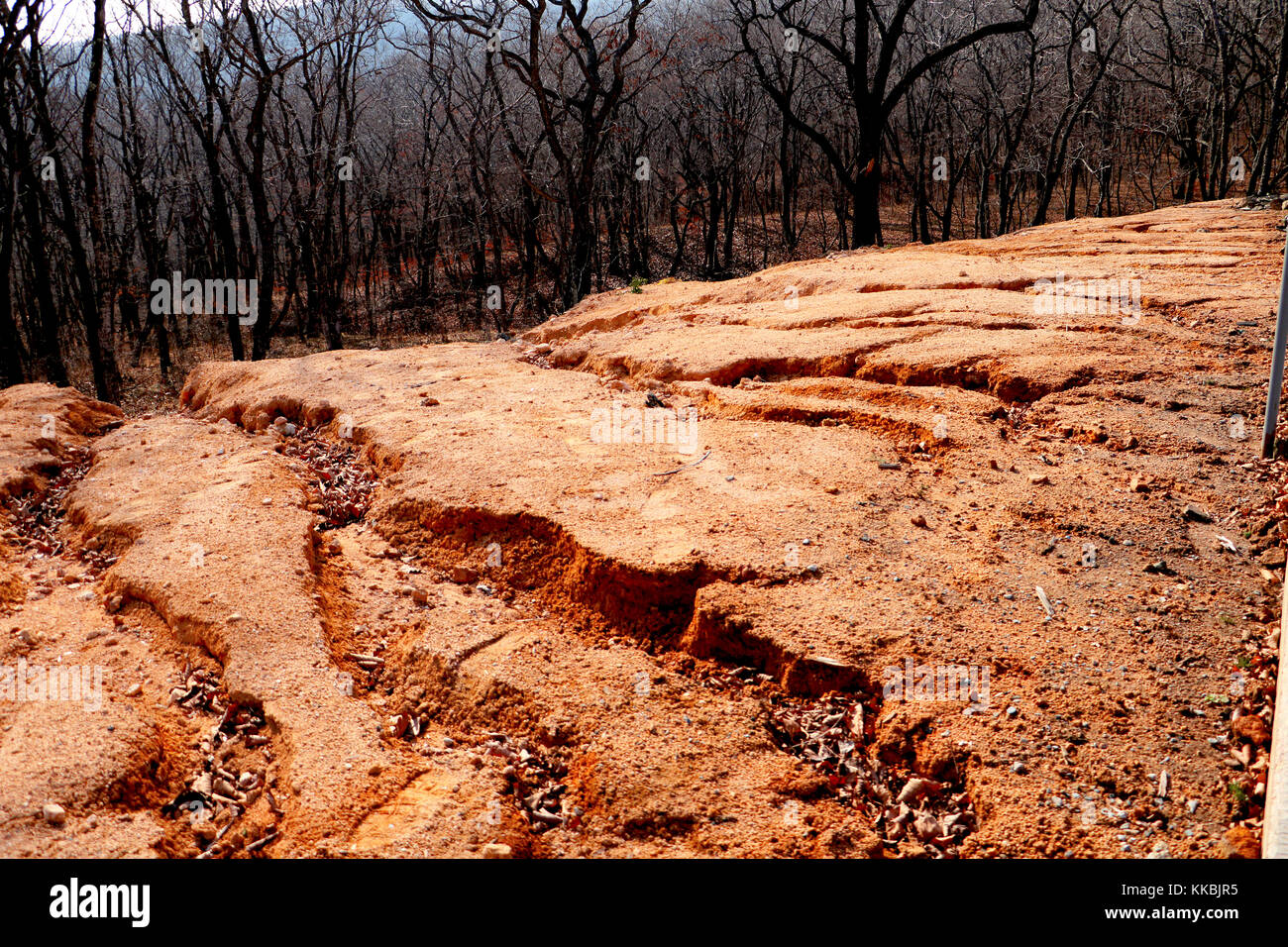 how to stop soil erosion on a slope