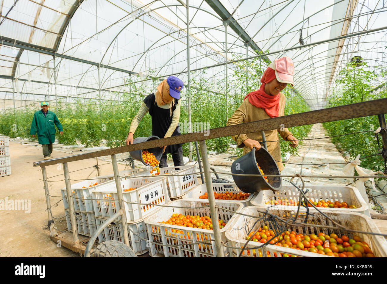 Young girls working on a greenhouse - Stock Image