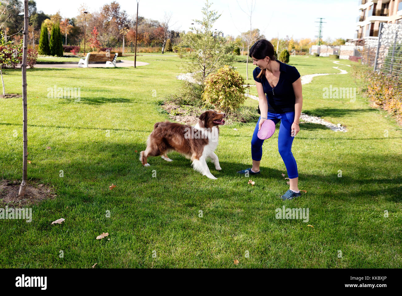 Dog Trainer Fetch Play - Stock Image