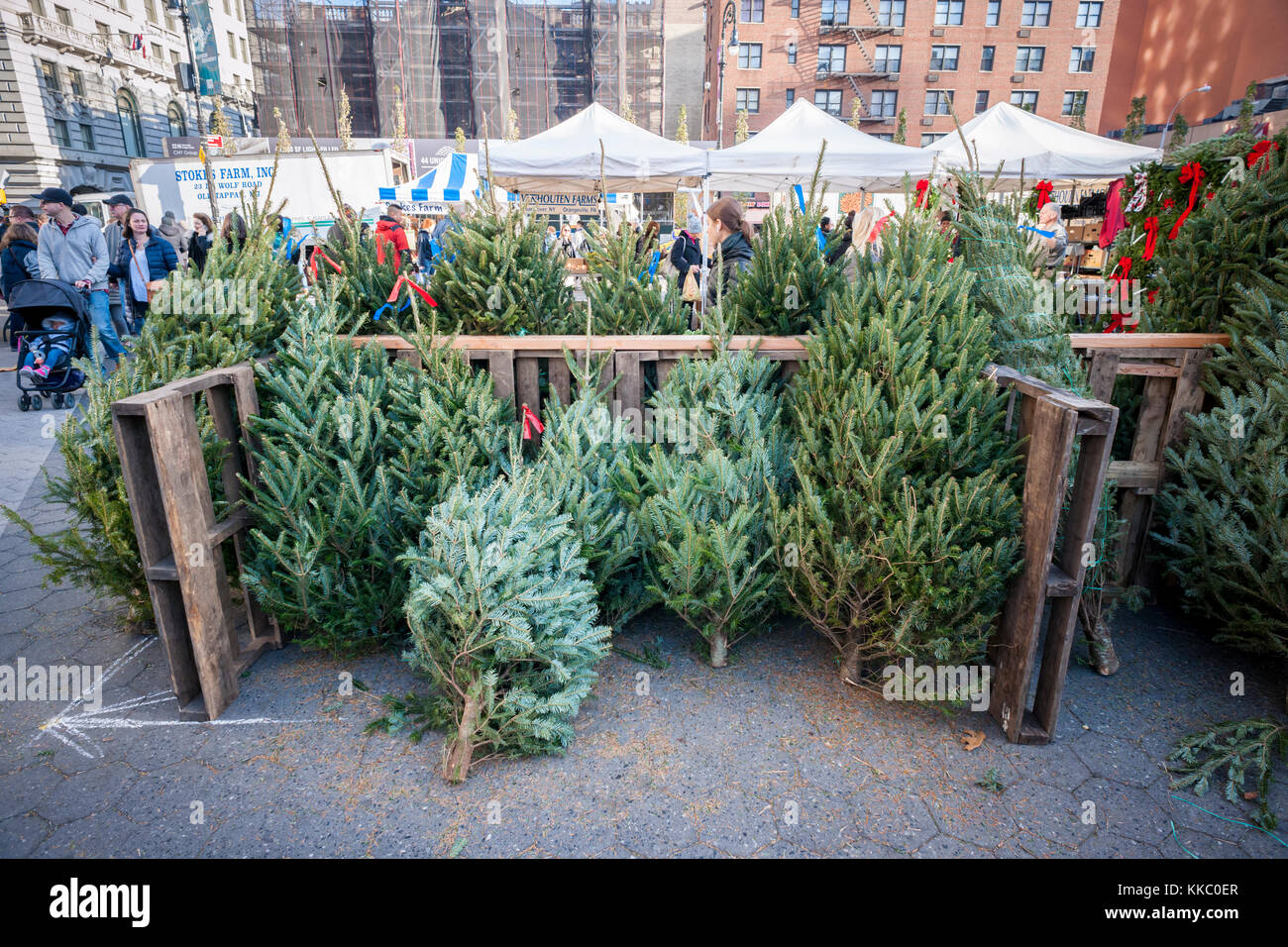 Christmas Trees For Sale In The Union Square Greenmarket In New York