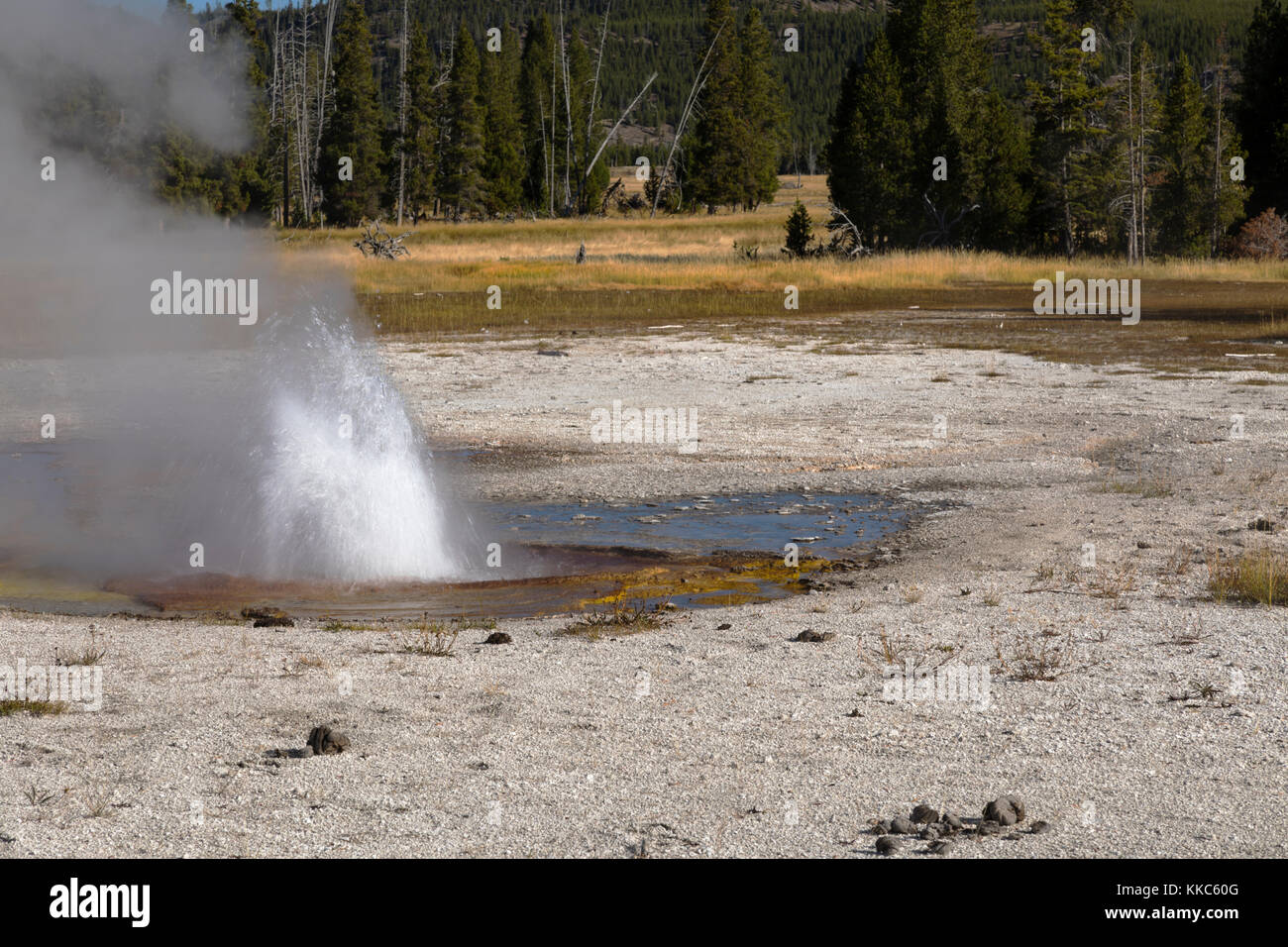 Rusty Geyser Thermal Feature in Biscuit Geyser Basin, Yellowstone National Park - Stock Image
