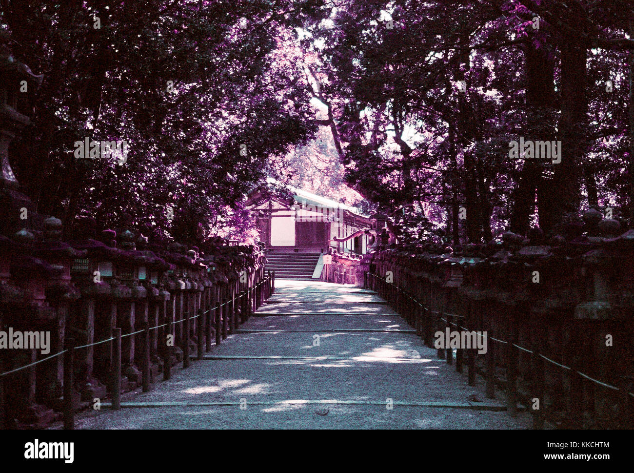 Path of Stone Lanterns at the Kasuga Shrine in Nara, Japan - Stock Image