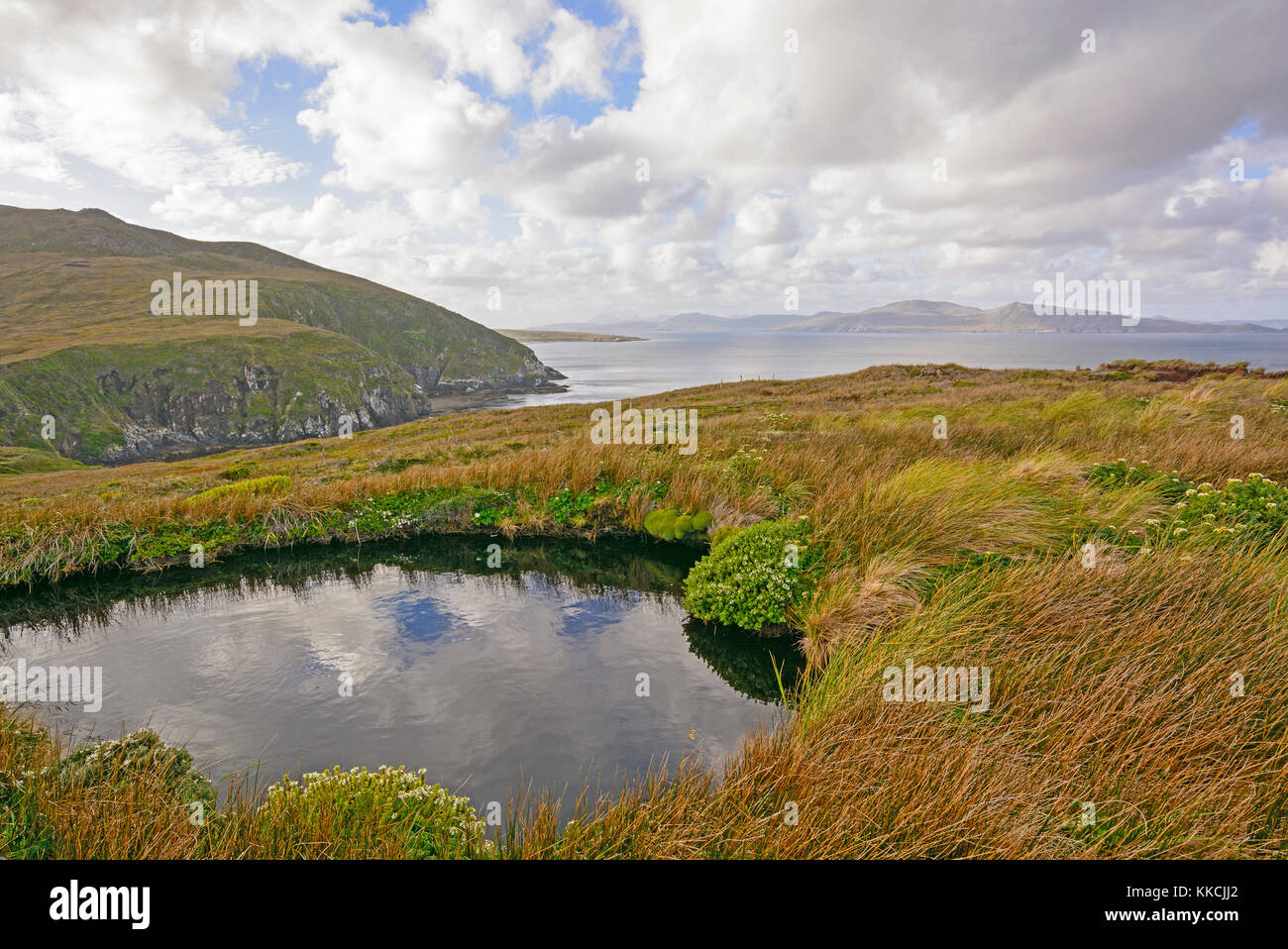 Colorful Landscape on Cape Horn Island in Tierrra del Fuego, Chile - Stock Image