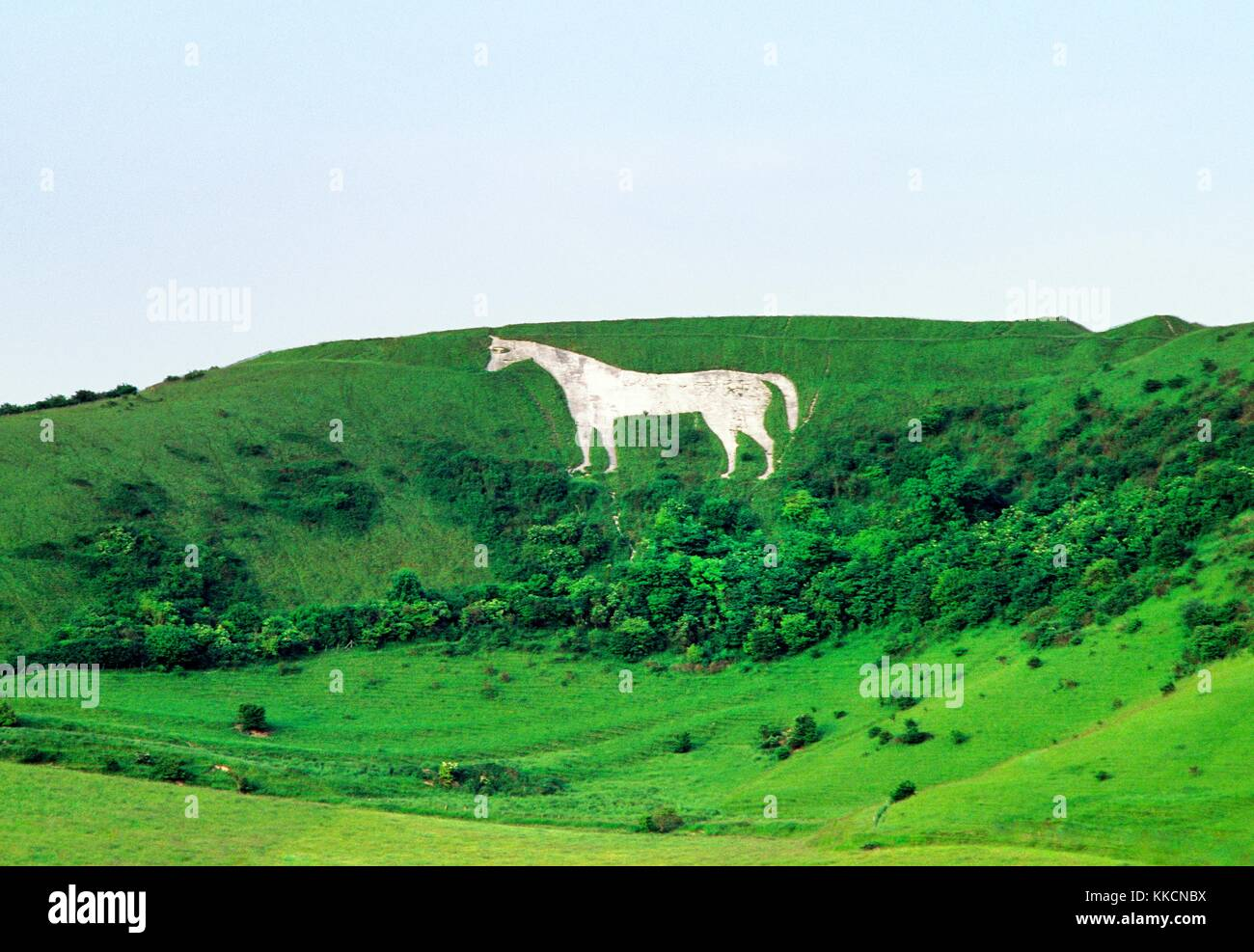 Westbury White Horse chalk hill figure below Bratton Camp Iron Age hill fort on the edge of Bratton Downs, Wiltshire, Stock Photo