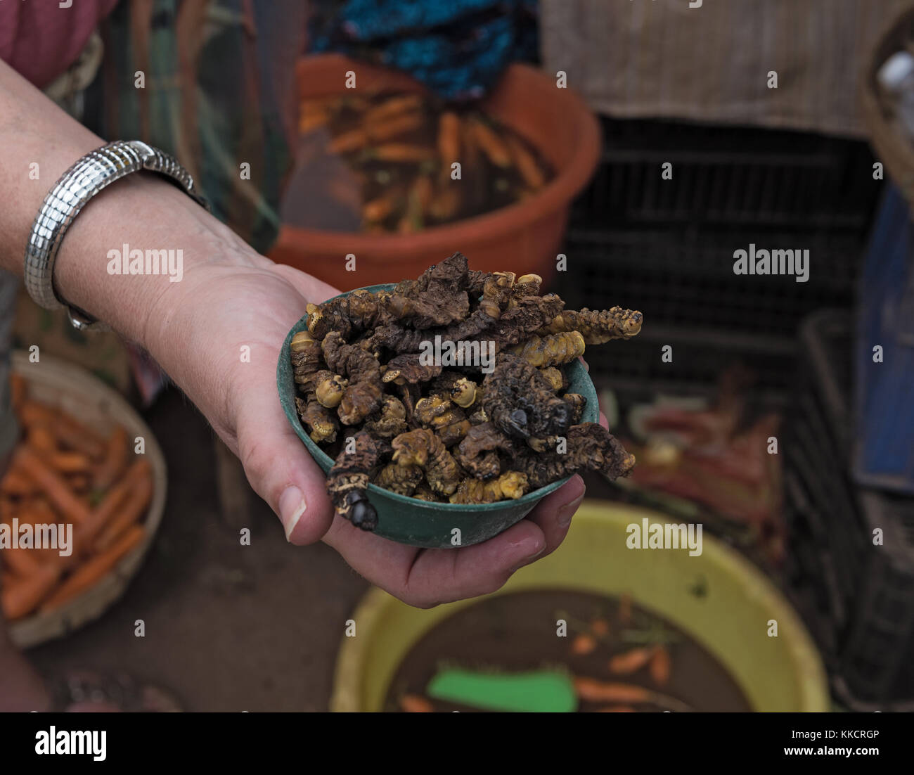 small bowl of roasted mopane caterpillars, Gonimbrasia belina at the market in livingstone, Zambia - Stock Image