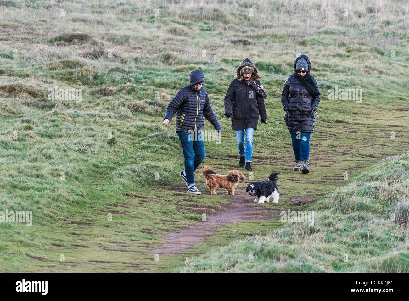 Dog walking - a family walking their dogs along a footpath on East Pentire Newquay Cornwall UK. - Stock Image
