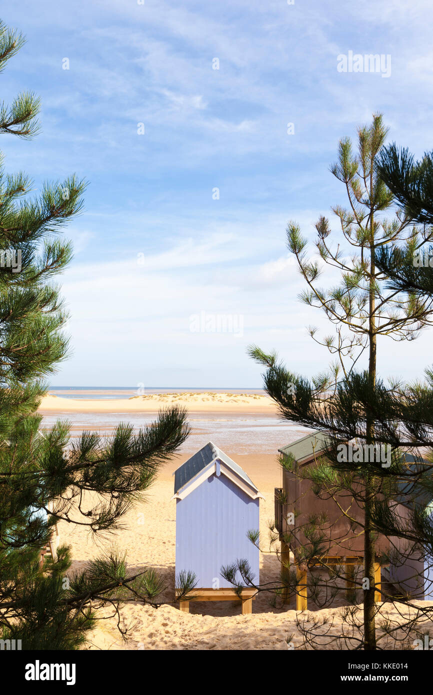 Beach hut and sand dunes viewed through coniferous trees - Stock Image