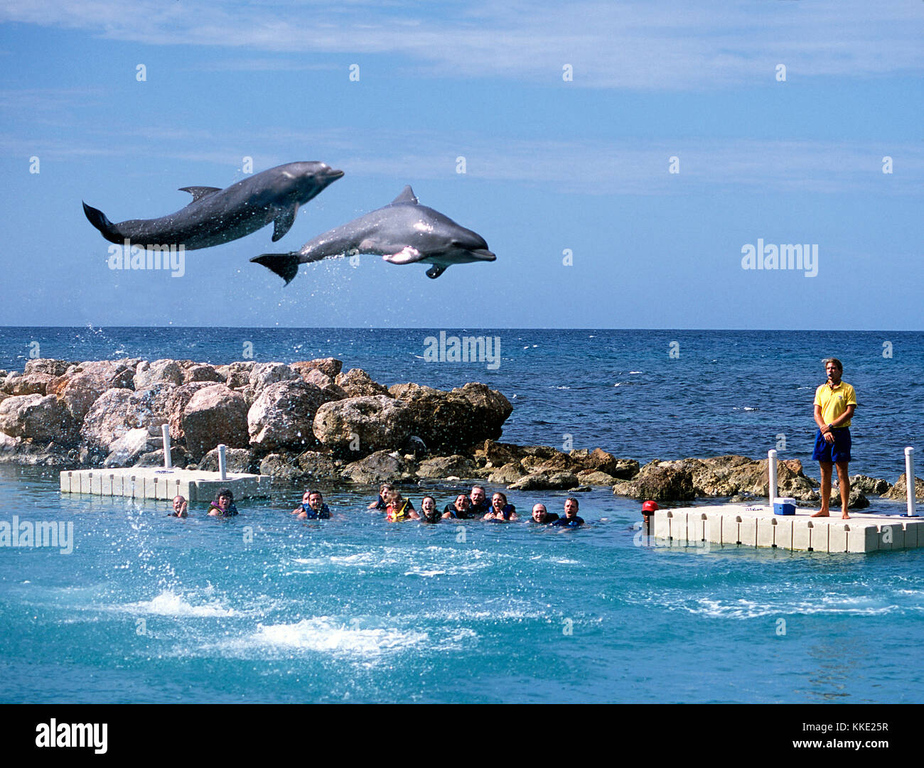 Swimming with Dolphins at Ocho Rios in Jamaica - Stock Image