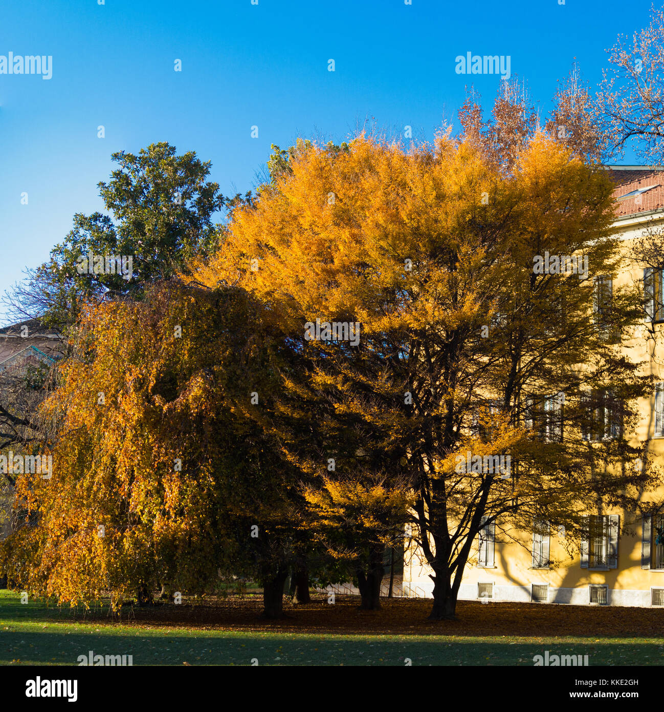 Autumn colors - A splendid group of trees at the garden of Guastalla in Milan Stock Photo