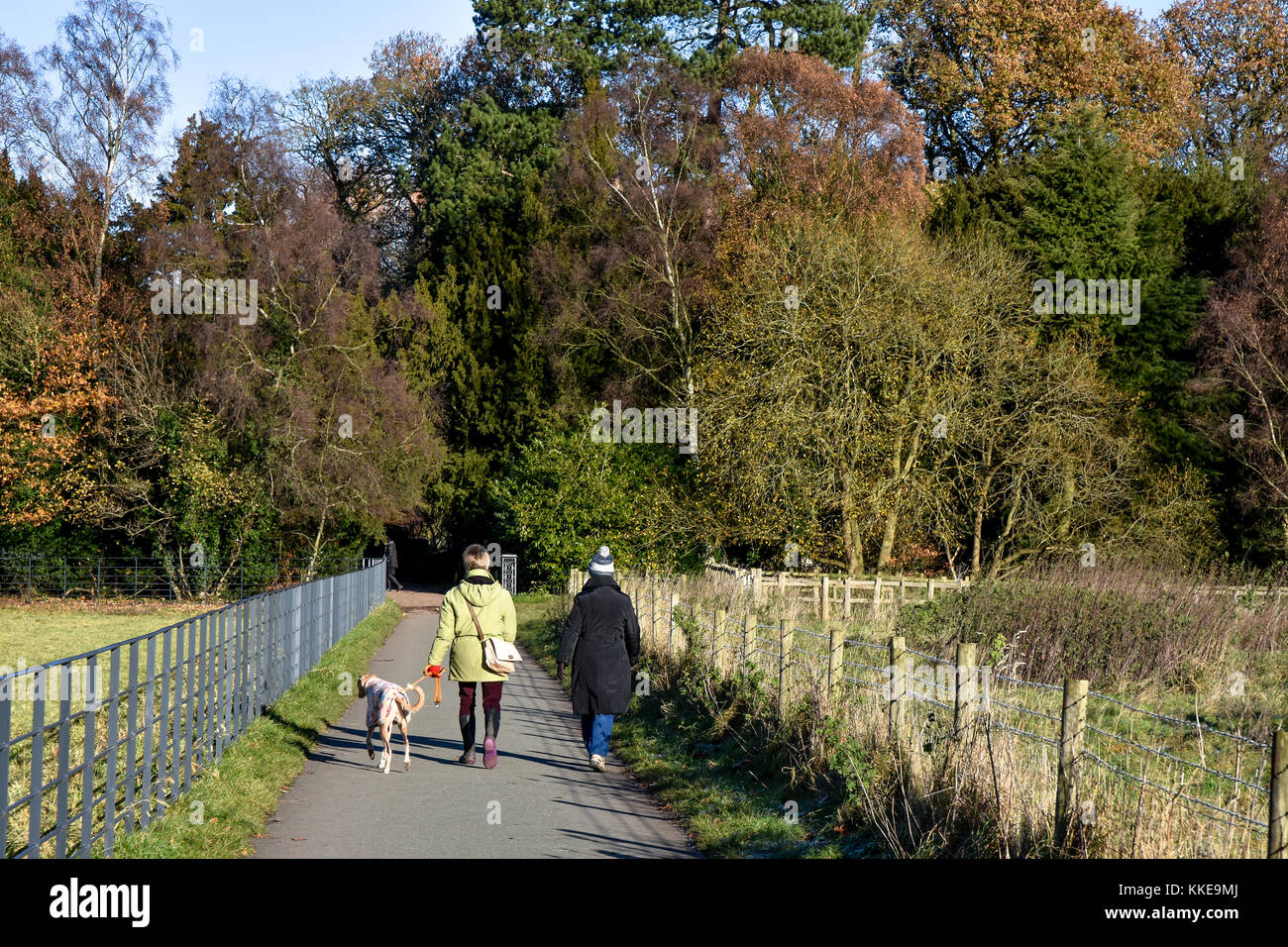 Dog walkers on the outskirts of Shugborough Hall, Staffordshire on a cold November winters day - Stock Image