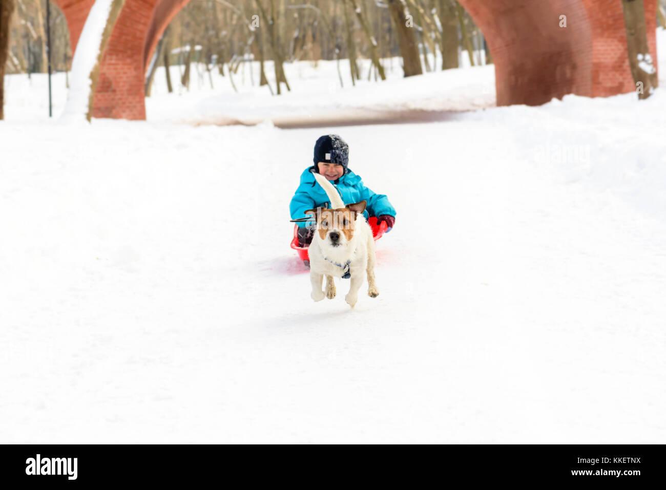 Smiling kid musher and his sled dog having fun at winter park - Stock Image