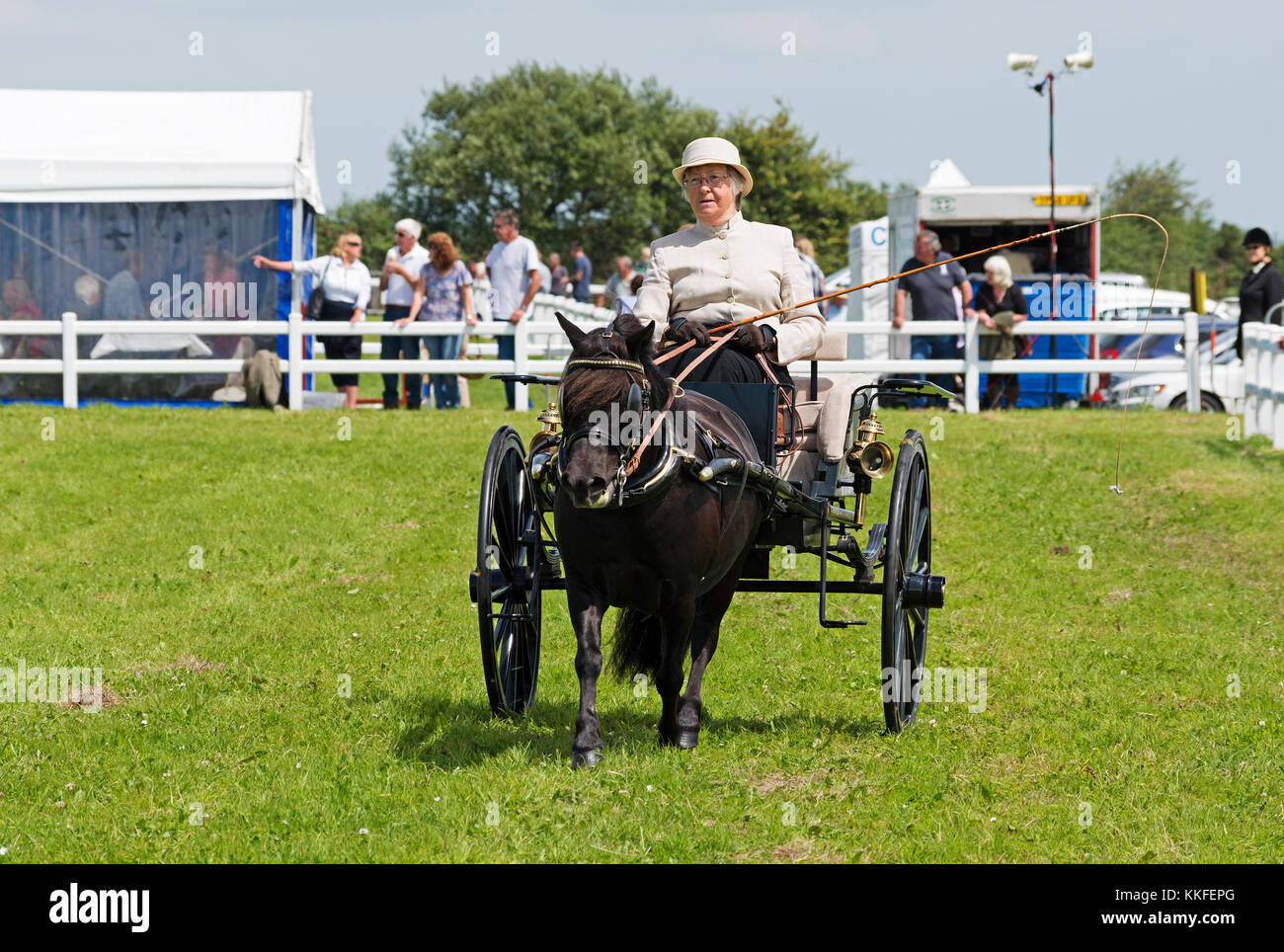 senior lady driving a pony and carriage at a country fayre in cornwall, england, uk. - Stock Image