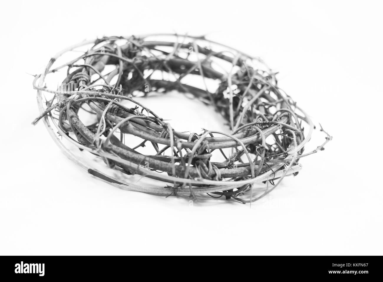 Crown of Thorns, as worn by Jesus Christ in the Easter Passion story during his Crucifixion, on a white background - Stock Image