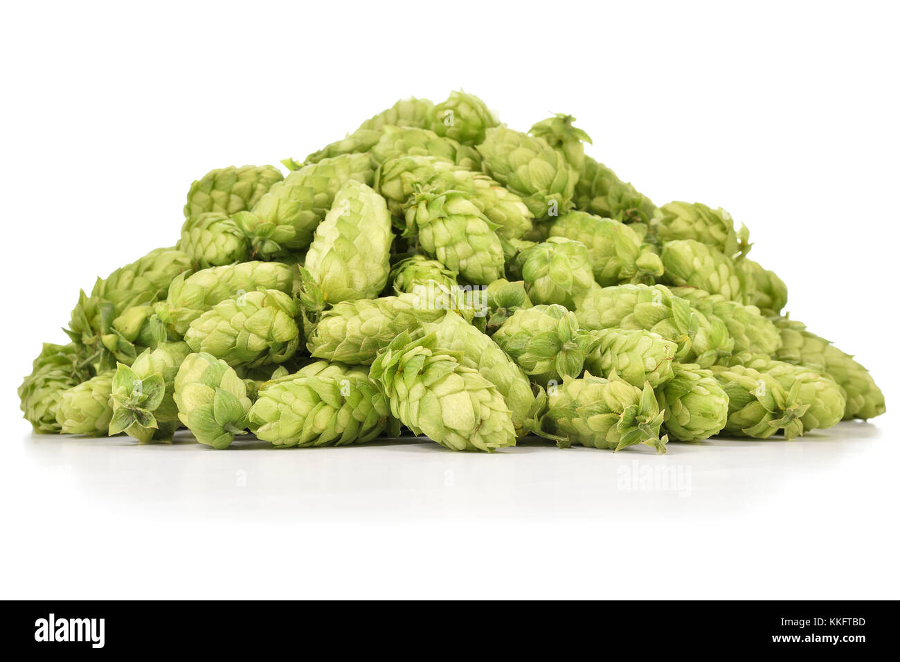 Heap of fresh green hops (Humulus lupulus) isolated on white background. Pile of hops, ingredient for brewery industry. - Stock Image