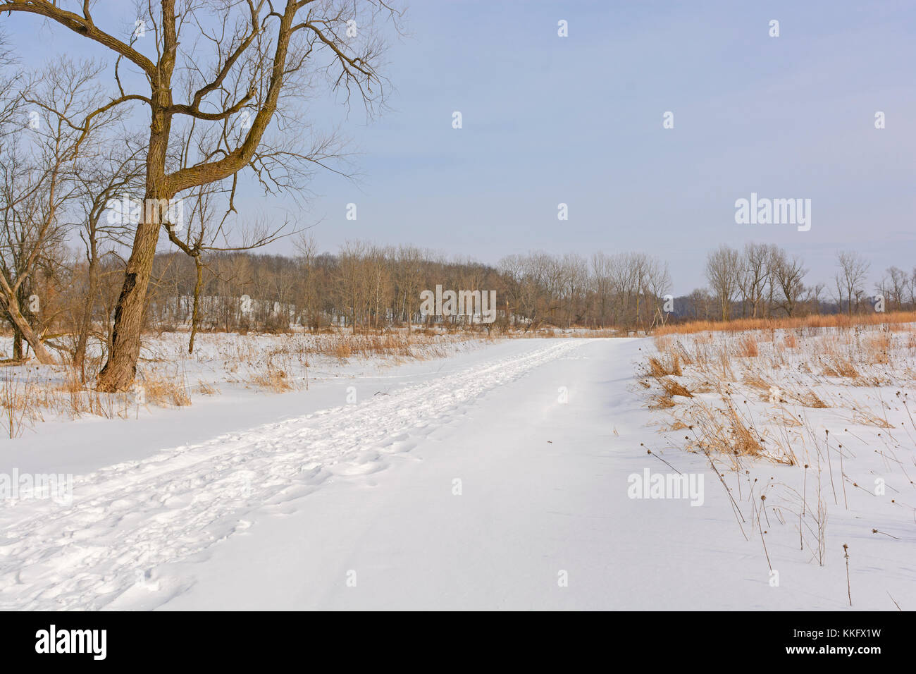 Serene Path in the Winter in Moraine Hills State Park in Illinois - Stock Image