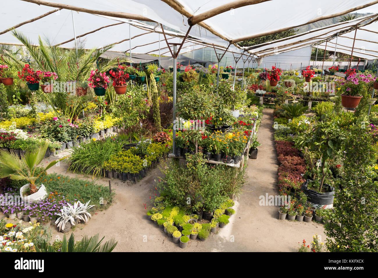 ecuador plant nursery - plants for sale, otavalo, ecuador south
