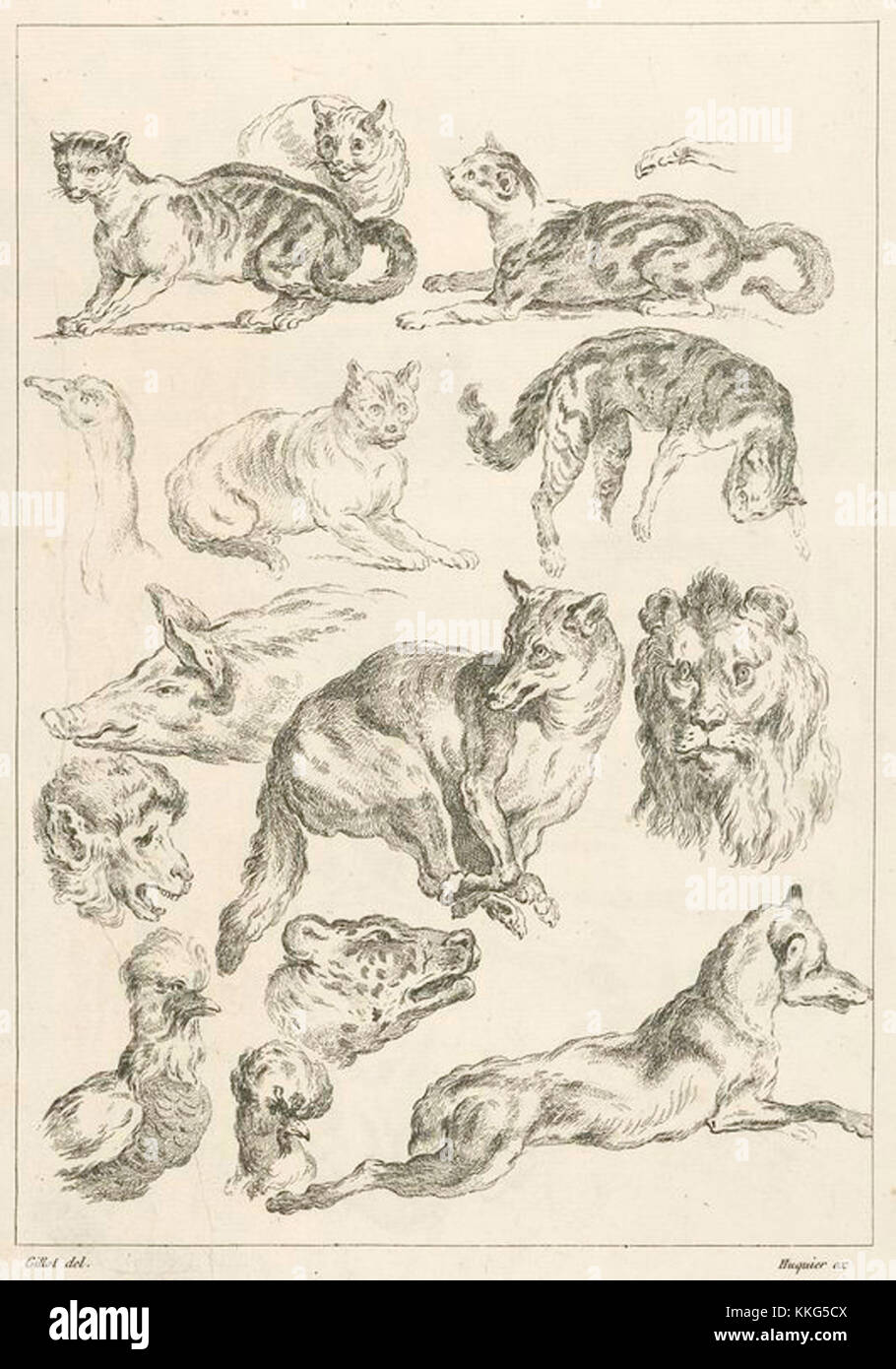 vintage drawings of various wild animals Stock Photo