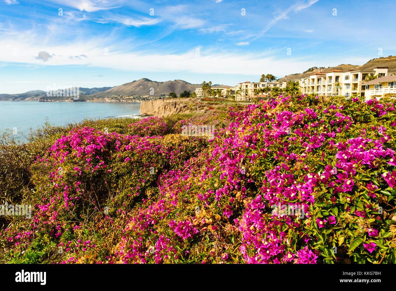 Pismo Beach, Shell Beach, oceanview from Spyglass Inn hotel on Highway 1, California, USA. Pink, magenta flowers - Stock Image