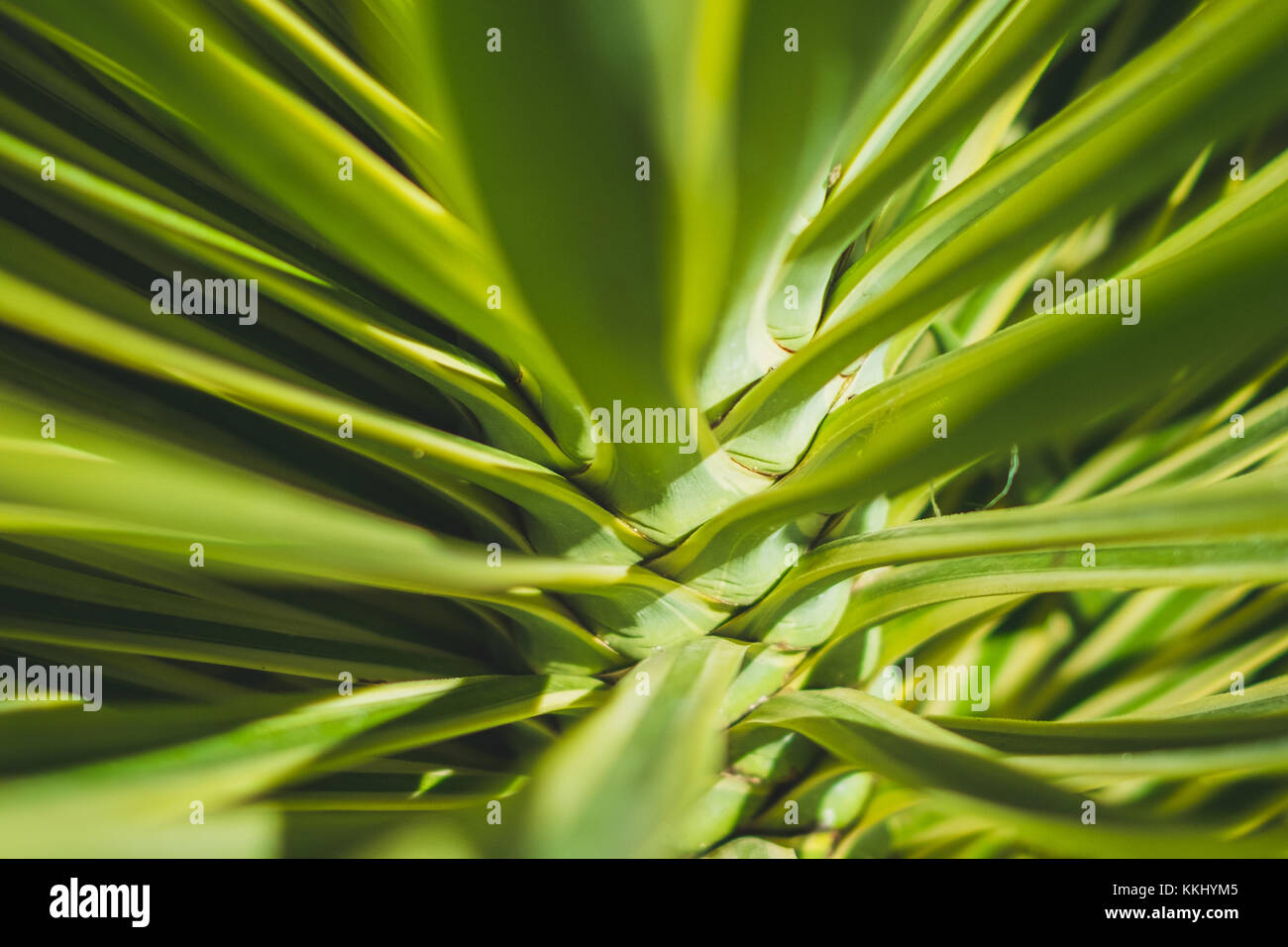 Agave Tree Stock Photos Amp Agave Tree Stock Images Alamy