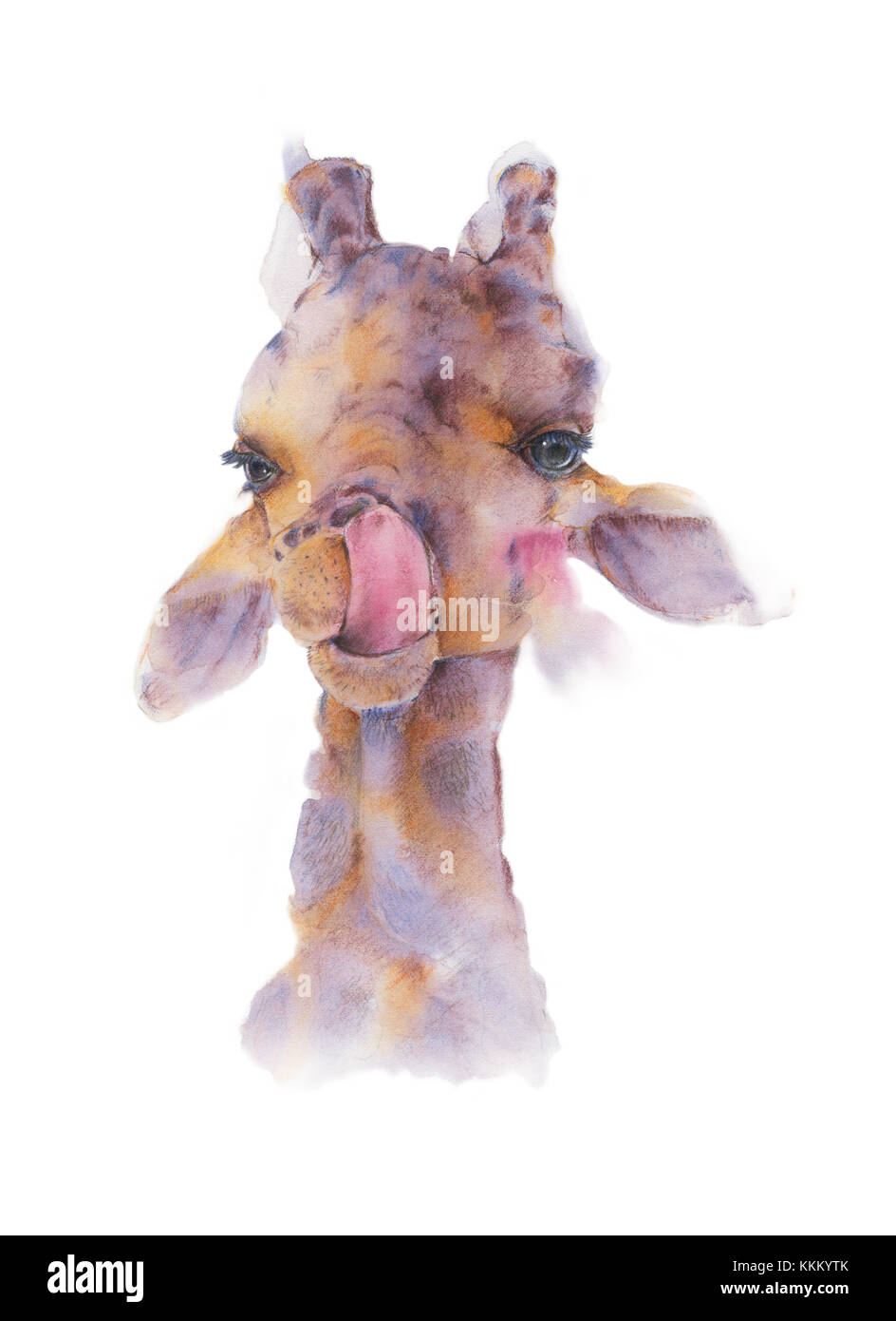 Hand drawn watercolor illustration of Giraffe is sticking tongue licking the nose isolated on white background. - Stock Image