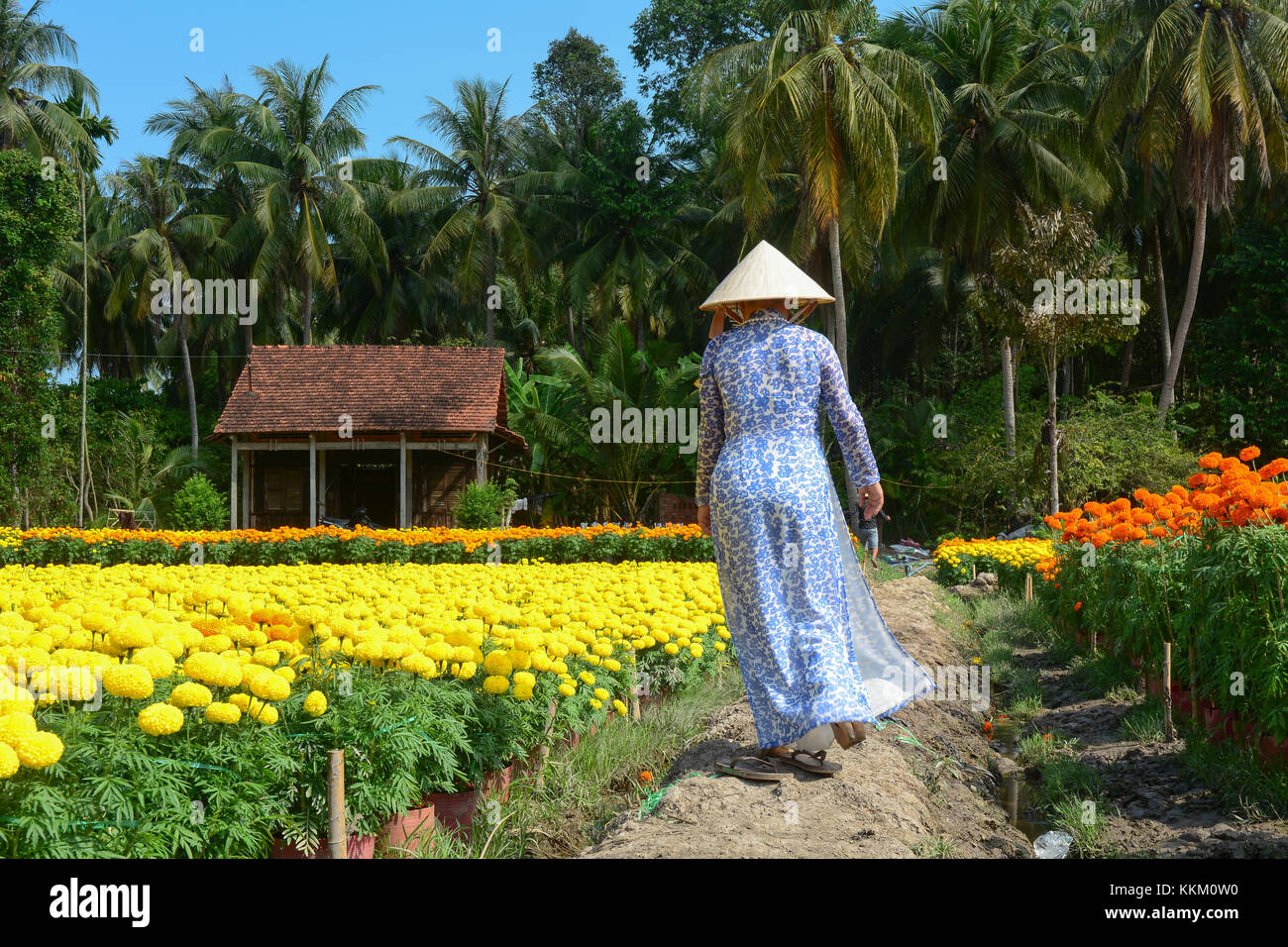 A woman walking at the flower plantation at sunny day in Sa Dec, Vietnam. Sadec District specializes in products - Stock Image
