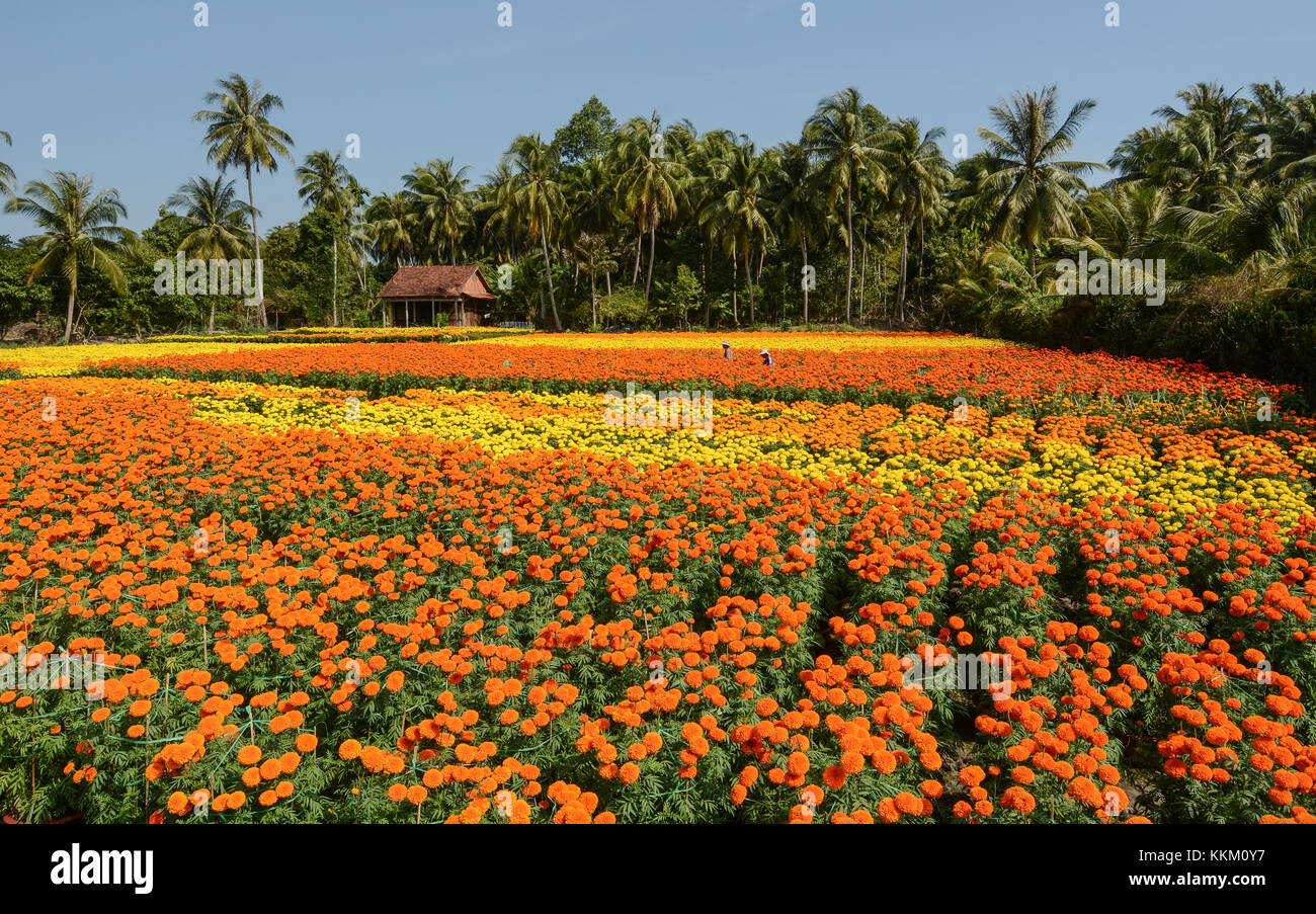 The flower plantation with a wooden house at sunny day in Sa Dec, Vietnam. Sadec District specializes in products - Stock Image