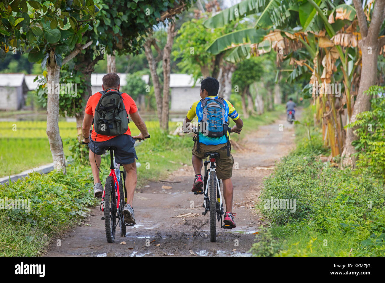 Western tourist with Indonesian guide riding mountain bikes during bicycle tour among rice fields on the island - Stock Image