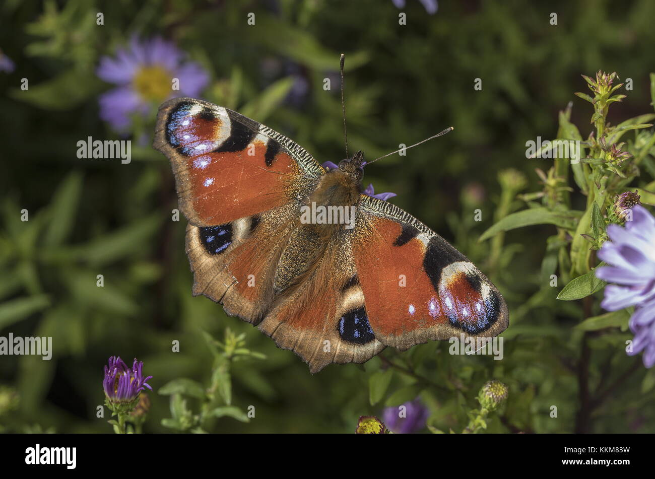 Butterflies And Gardening Stock Photos & Butterflies And Gardening ...