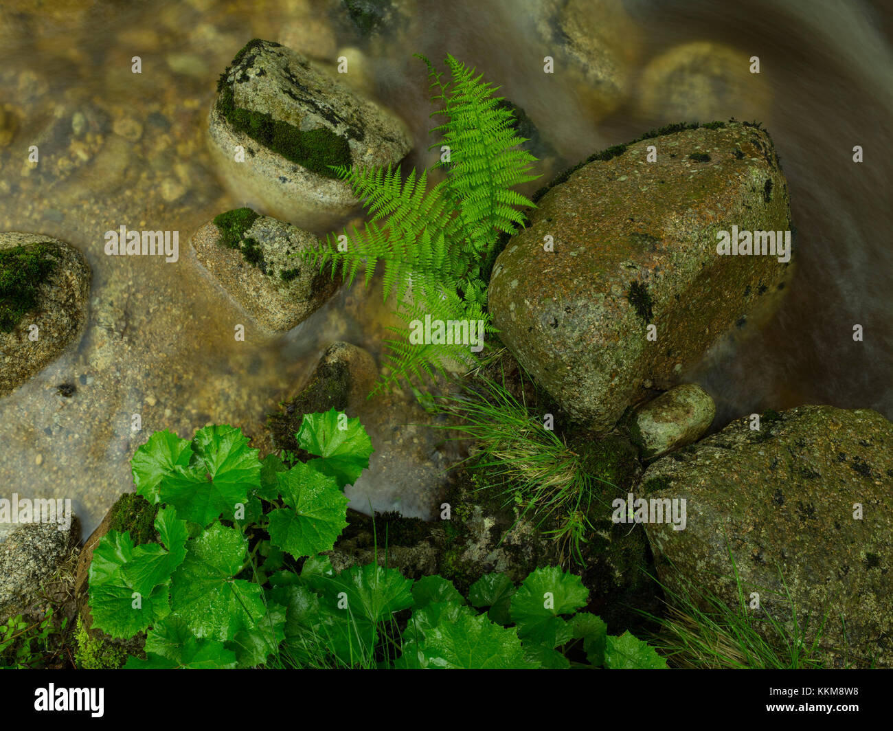 Stream course in the forest, close-up - Stock Image