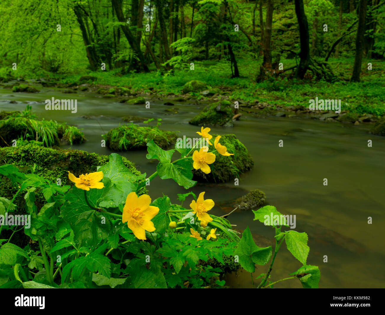 The Schlücht in the Schlüchttal, Black Forest, Baden-Wuerttemberg, Germany, Stock Photo
