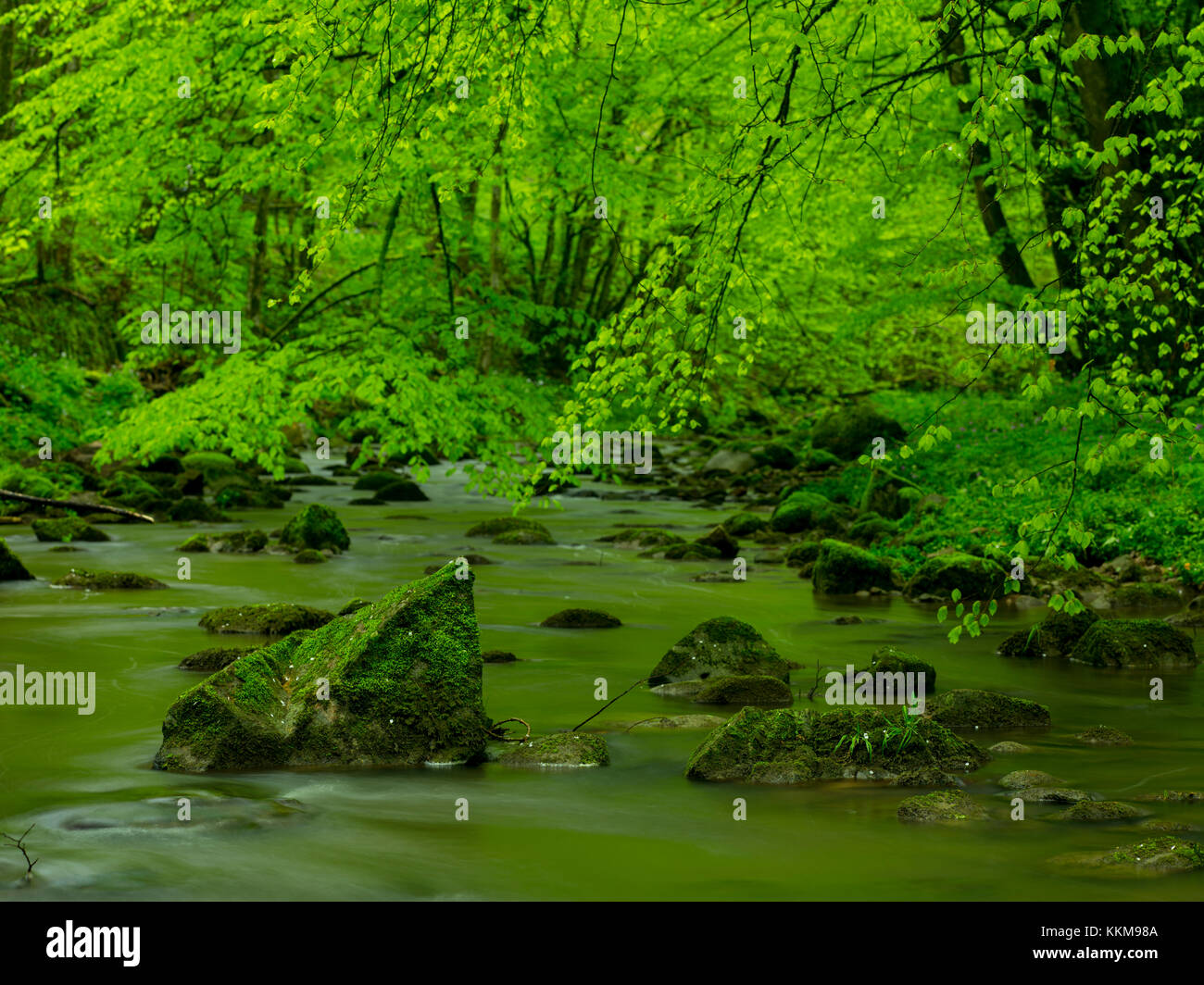 Stream course in the Schlüchttal, Black Forest, Baden-Wuerttemberg, Germany, - Stock Image