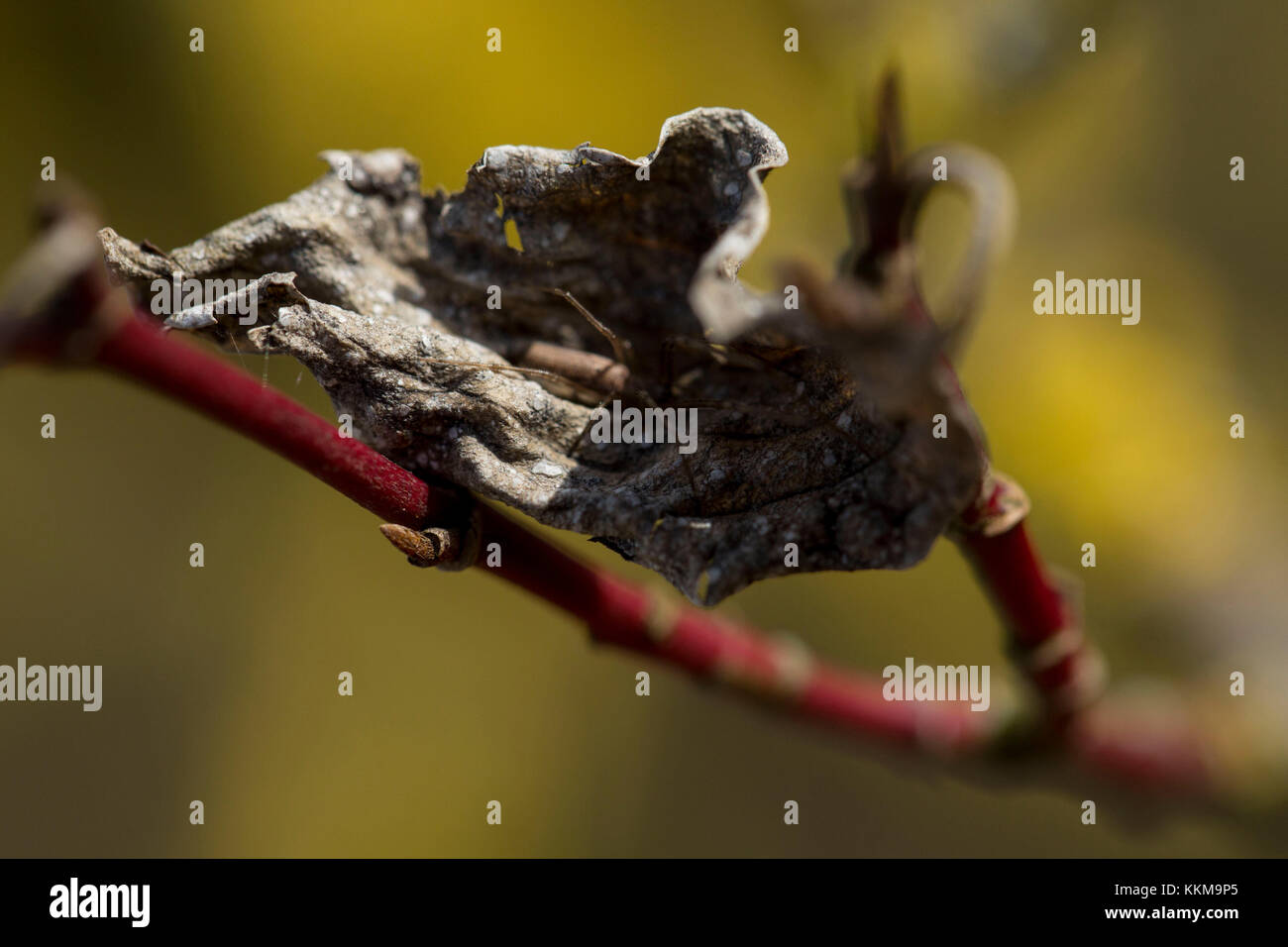 Twig with leaf and spider, close-up, - Stock Image