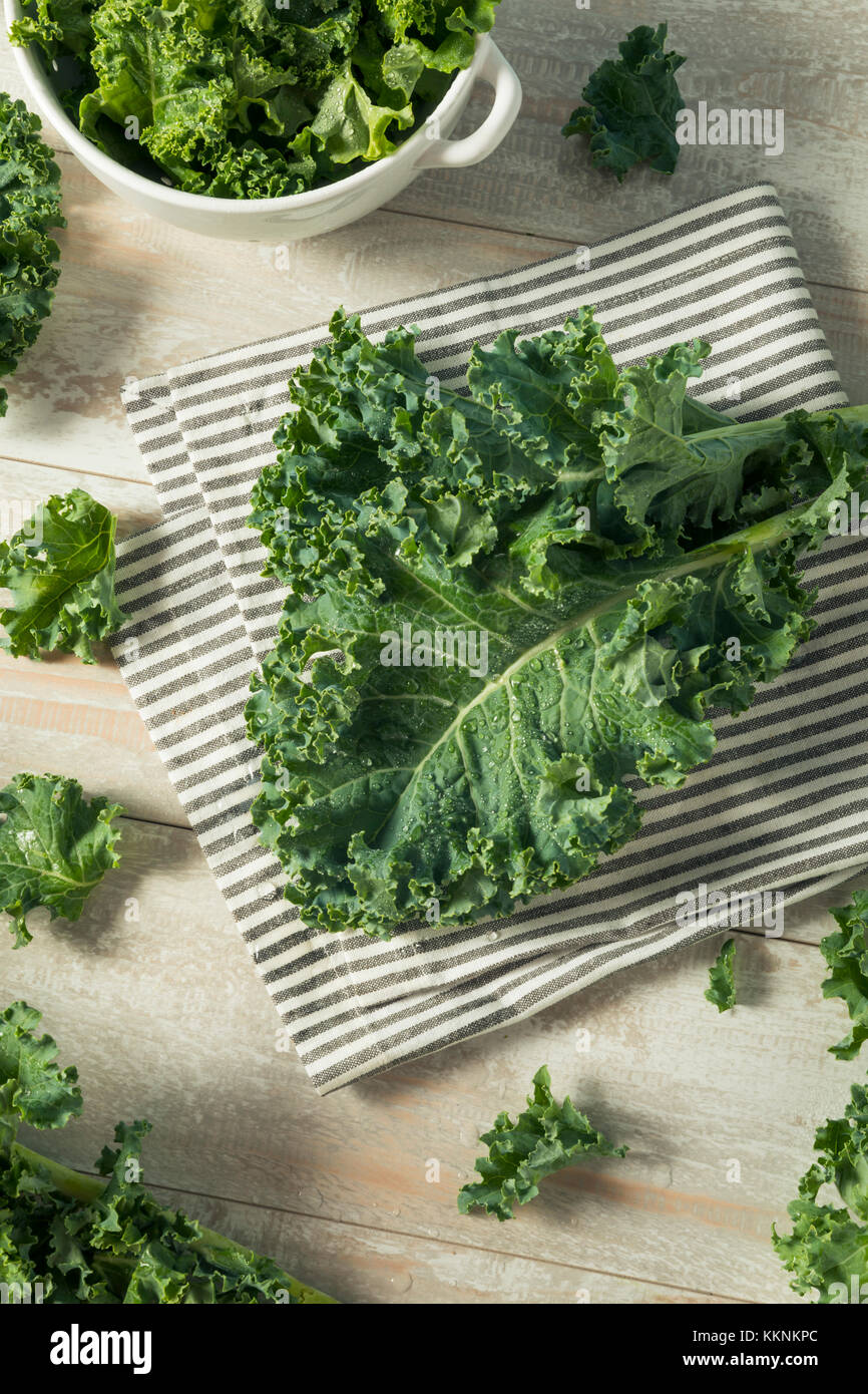 Raw Green Organic Curly Kale in a Bowl - Stock Image
