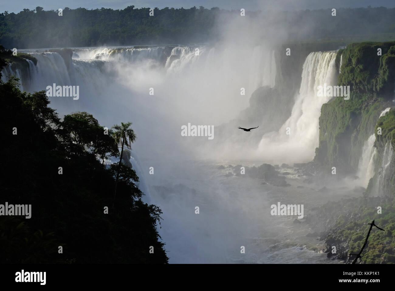 Bird flying in the Devil's Throat, Iguassu Falls Brazil - Stock Image