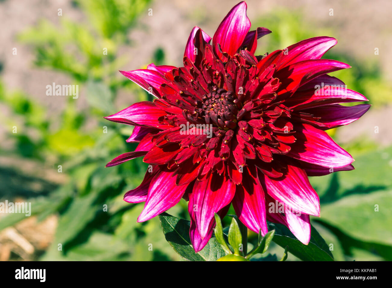 bright colorful flowers nature floral Paradise bright colors Stock ...