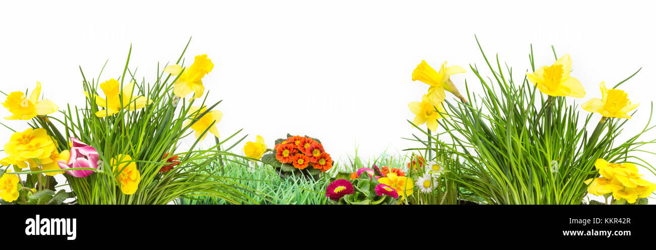 Spring Meadow Flowers Banner Isolated Stock Photo 167079887 Alamy