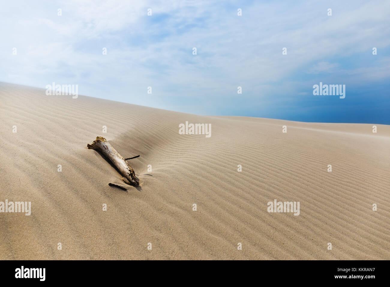 The wandering dune Rabjerg Mile - Stock Image