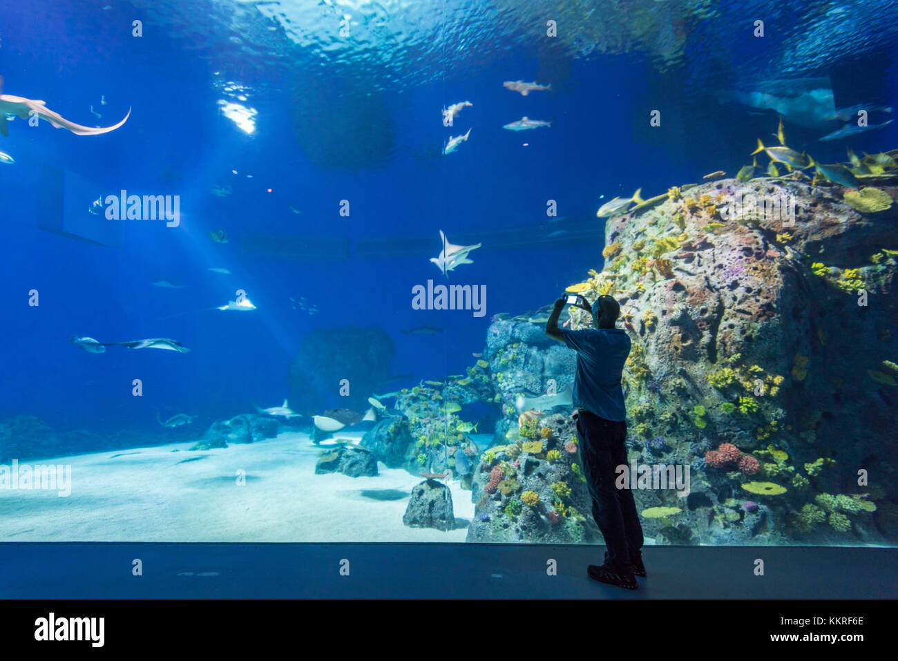 Kastrup, Copenhagen, Hillerod, Denmark. National Aquarium or Blue Planet (Den Bla Planet). - Stock Image
