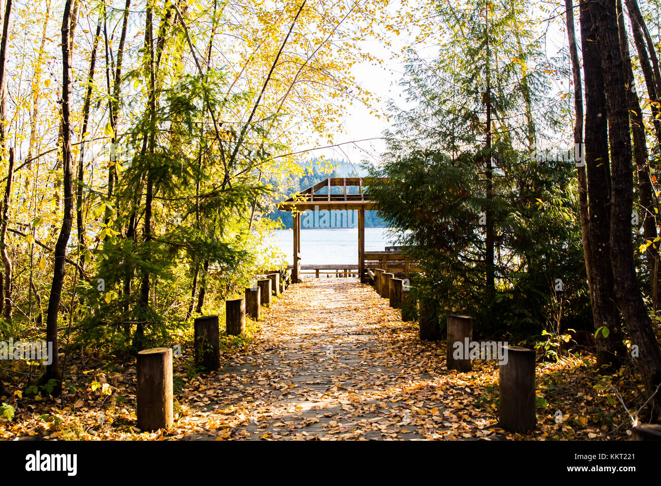 Autumn path covered with golden leaves - Stock Image
