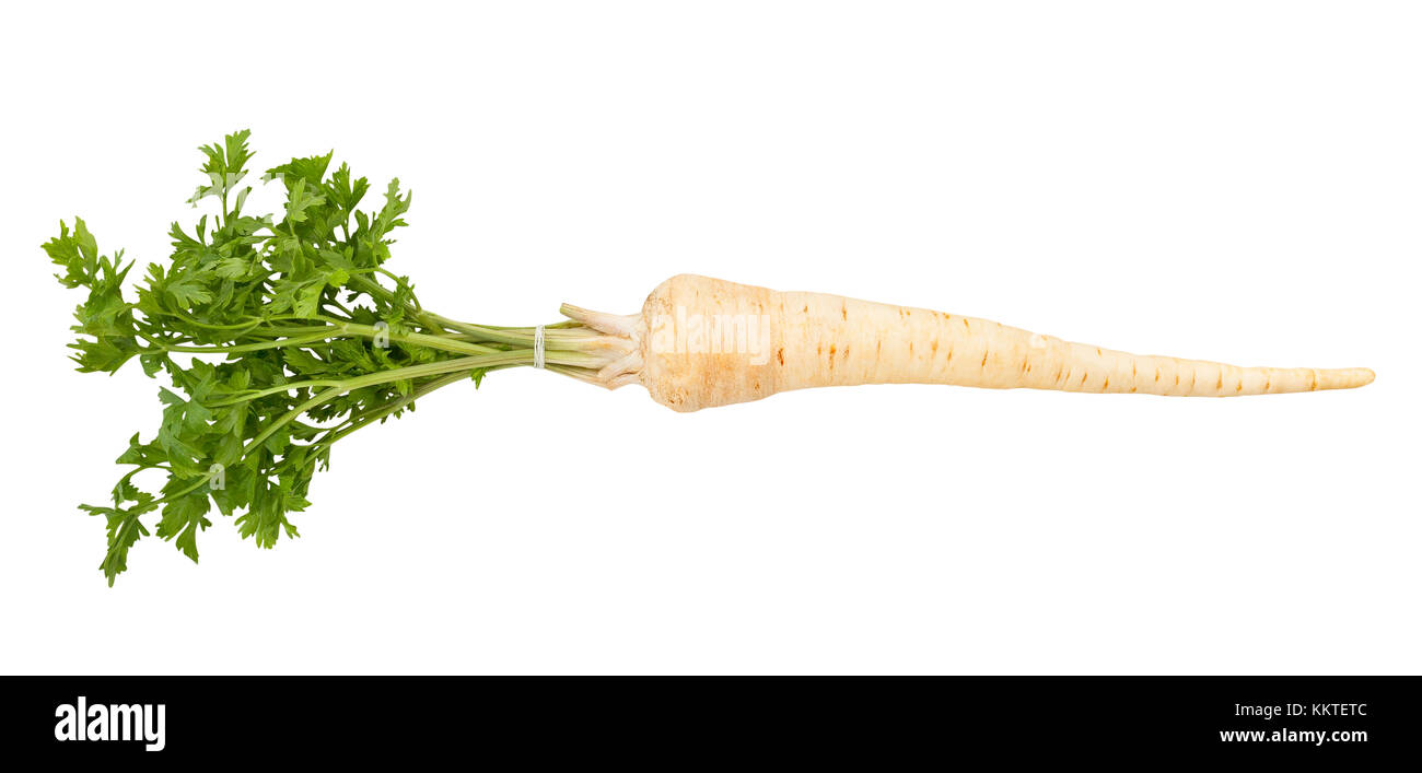 parsley root path isolated - Stock Image