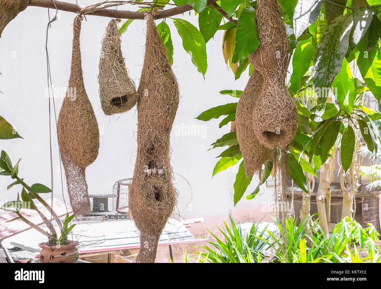 Skylark Nests And Bird Eggs Weaver Bird Nest Made Of Hay Skylark