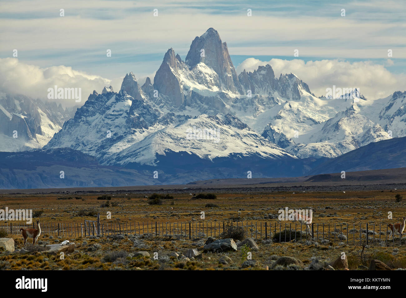 Mount Fitz Roy, Parque Nacional Los Glaciares (World Heritage Area), and guanacos jumping fence, Patagonia, Argentina, - Stock Image