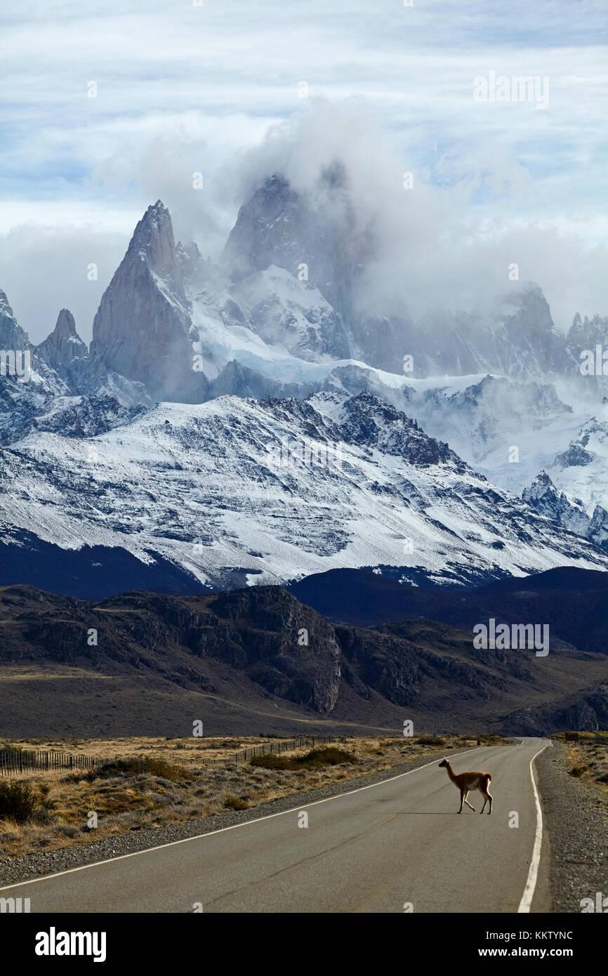 Mount Fitz Roy, Parque Nacional Los Glaciares (World Heritage Area), and guanaco crossing road near El Chalten, - Stock Image