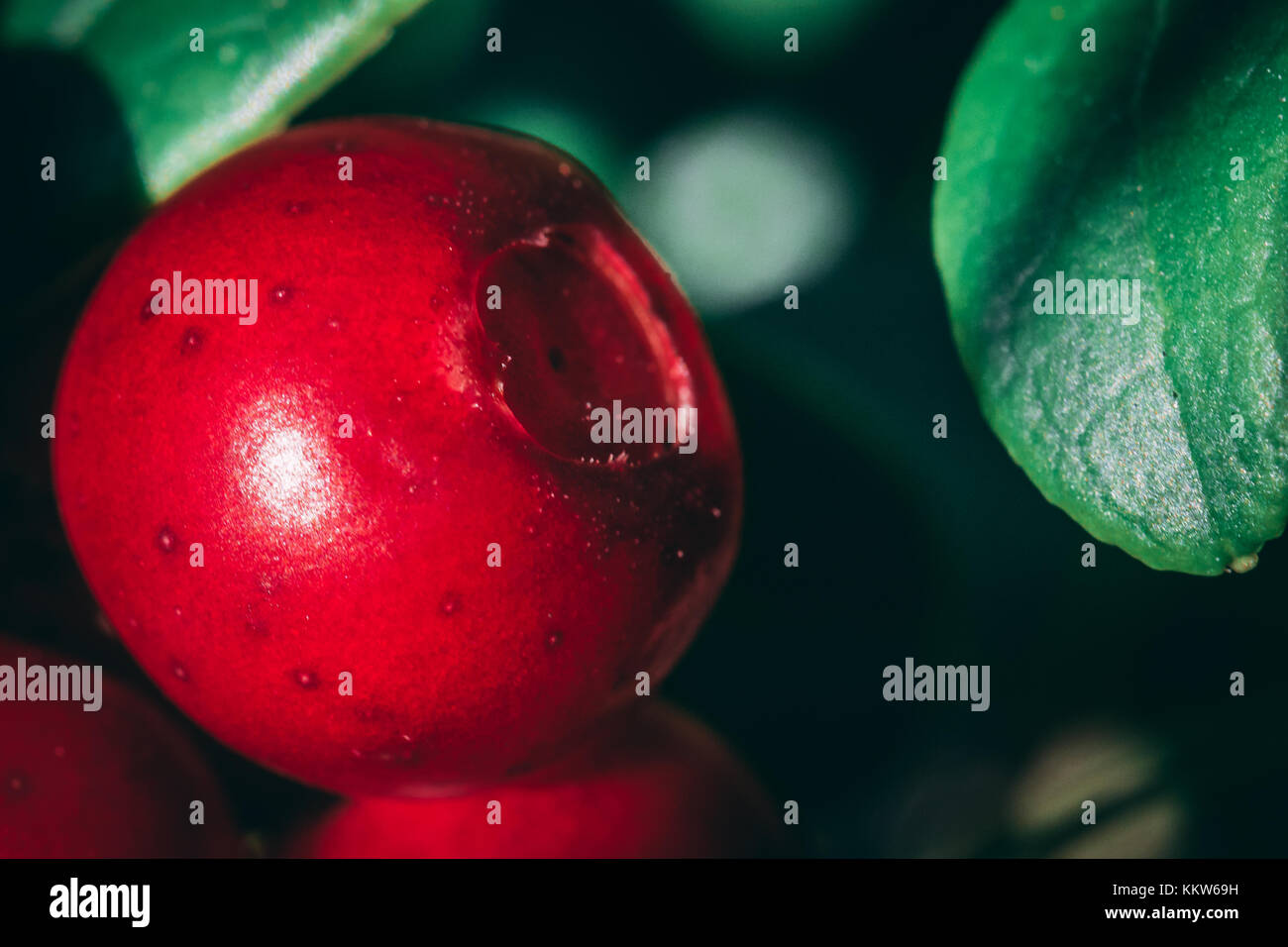 Lingonberry close-up - Stock Image