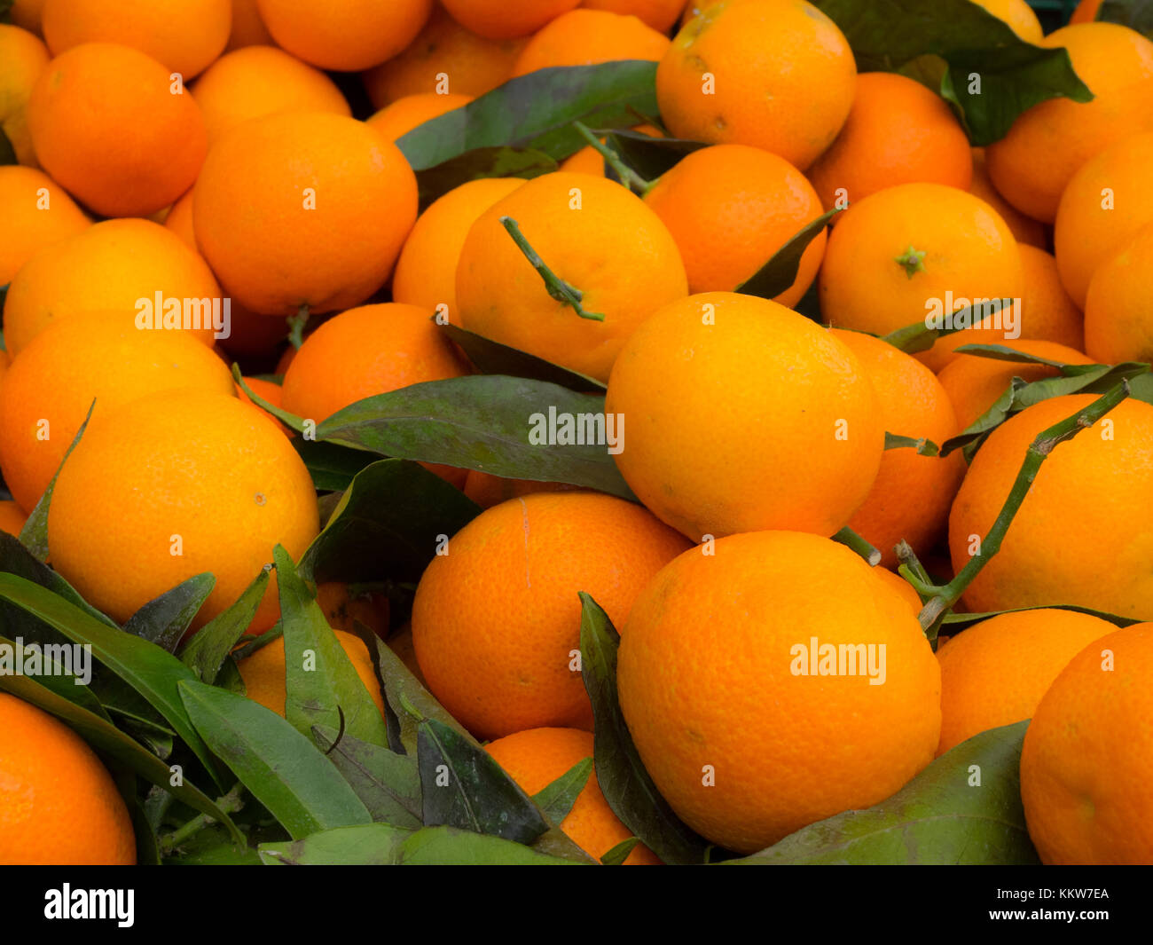 clementines on a market - Stock Image